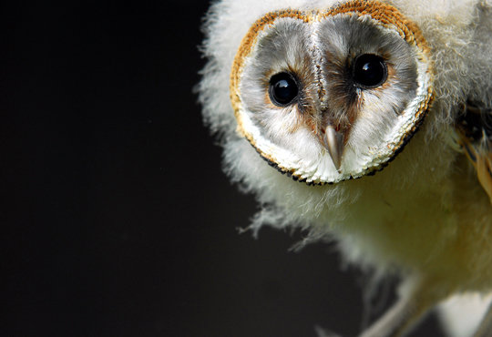 Advertising - Wildlife photography, Owl Centre, Redcar
