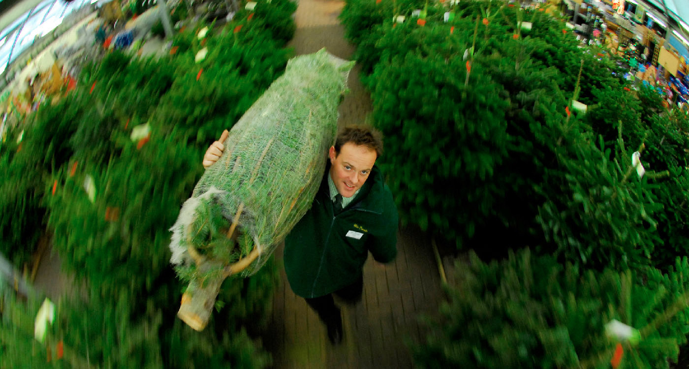 Teesside garden centre selling 100's of real Christmas trees